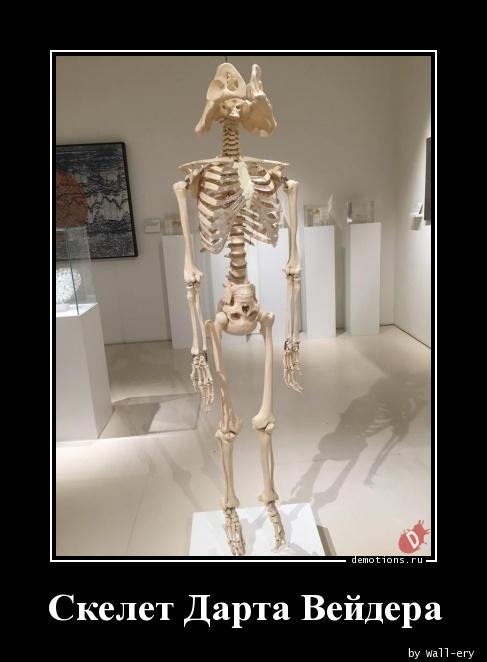 Анекдоты Про Скелетов