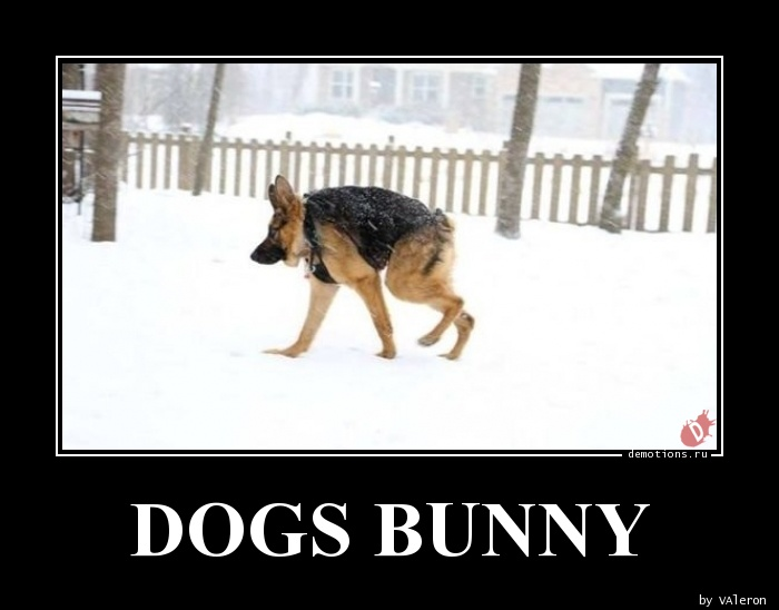 DOGS BUNNY
