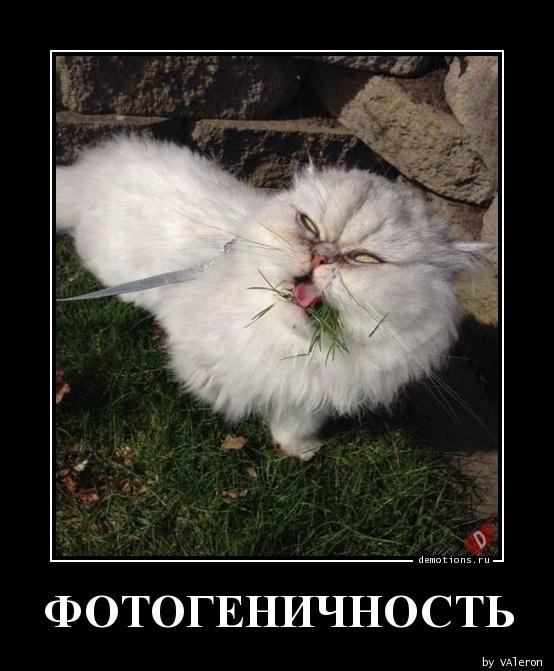 ФОТОГЕНИЧНОСТЬ