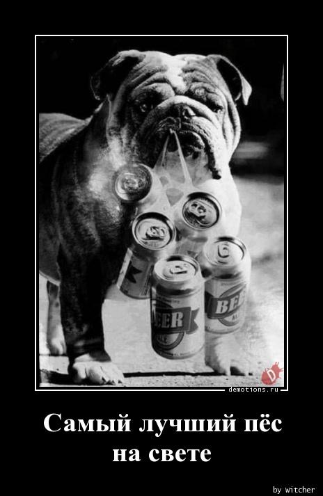 Самый лучший пёс на свете