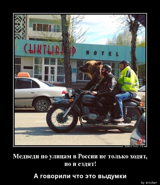 Медведи по улицам в России не только ходят, но и ездят!