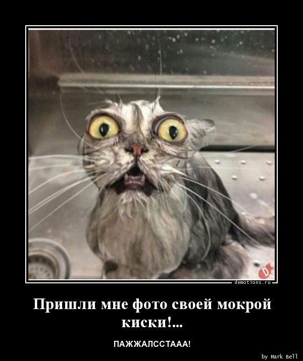 смотреть фото мокрой киски