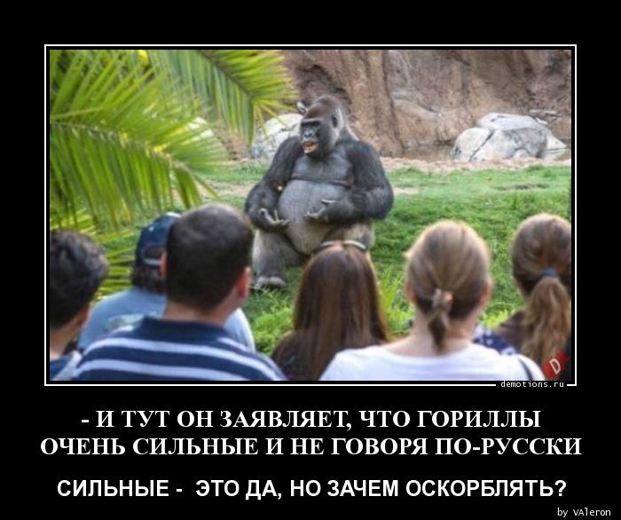 - И ТУТ ОН ЗАЯВЛЯЕТ, ЧТО ГОРИЛЛЫ ОЧЕНЬ СИЛЬНЫЕ И НЕ ГОВОРЯ ПО-РУССКИ