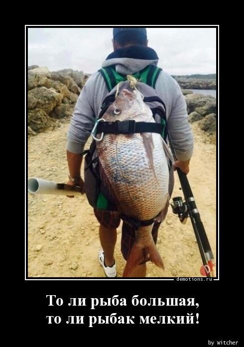 То ли рыба большая, то ли рыбак мелкий!