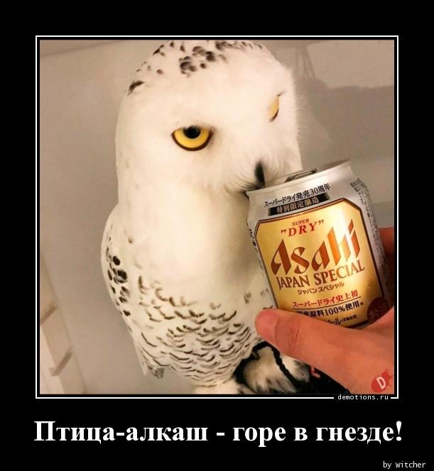 Птица-алкаш - горе в гнезде!