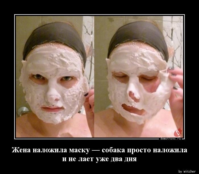 Жена наложила маску — собака просто наложила  и не лает уже два дня