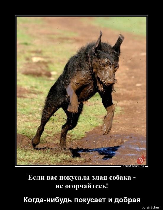 Если вас покусала злая собака - не огорчайтесь!