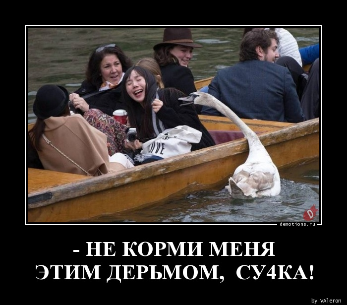 - НЕ КОРМИ МЕНЯ ЭТИМ ДЕРЬМОМ,  СУ4КА!