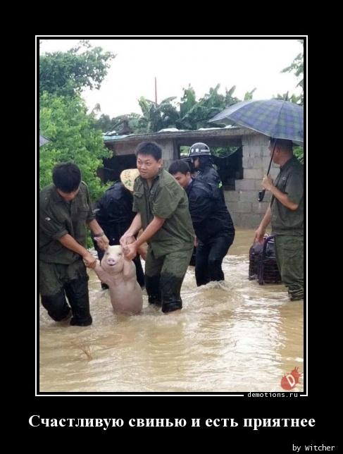Счастливую свинью и есть приятнее