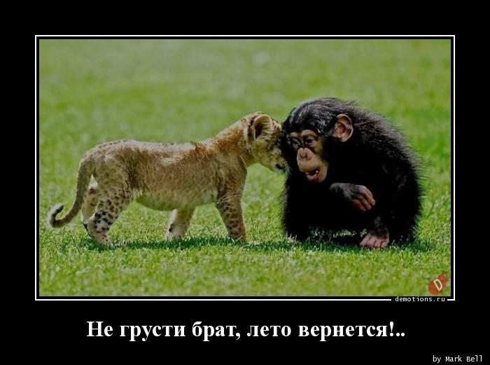 Не грусти брат, лето вернется!..