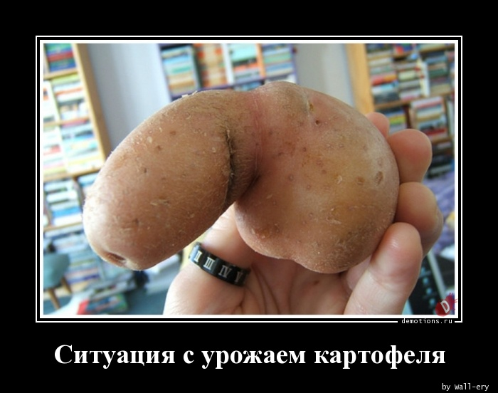 Ситуация с урожаем картофеля