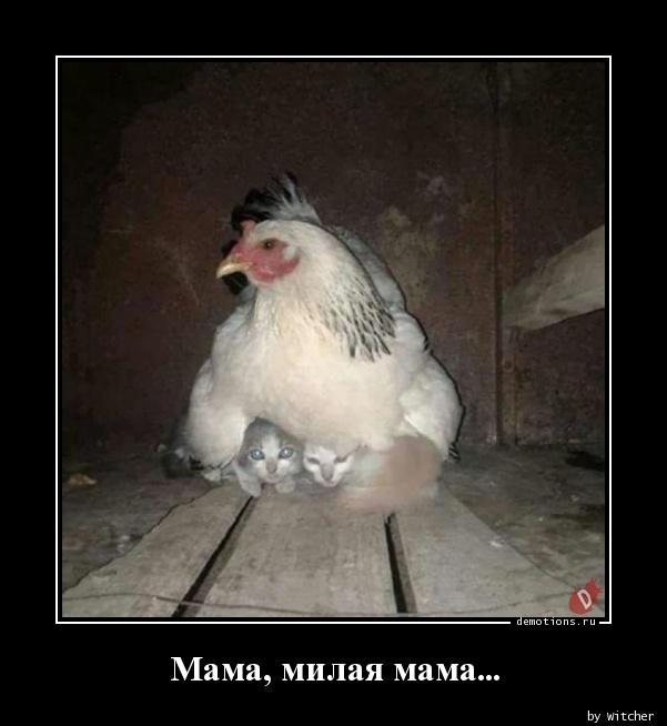 Мама, милая мама...