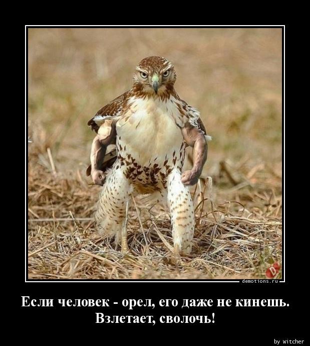 Если человек - орел, его даже не кинешь. Взлетает, сволочь!
