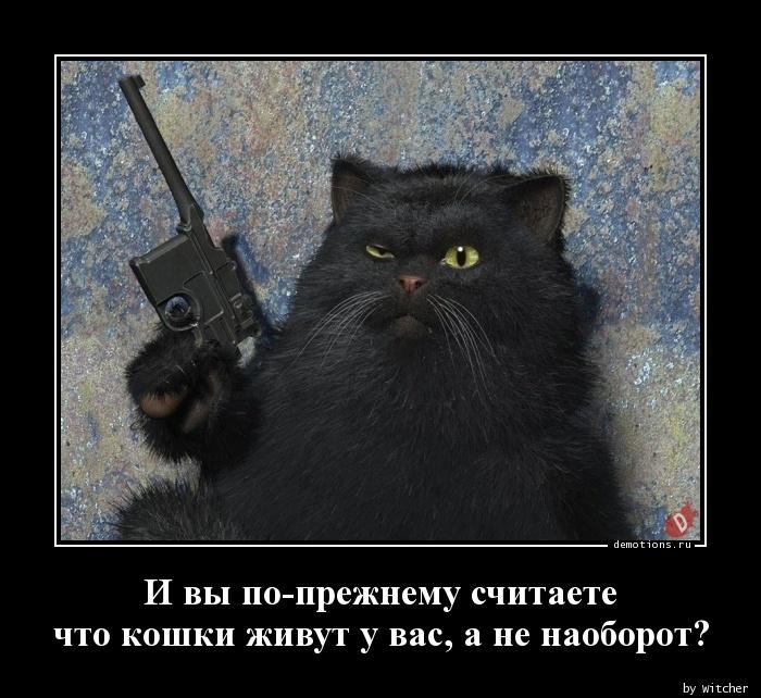 И вы по-прежнему считаете  что кошки живут у вас, а не наоборот?