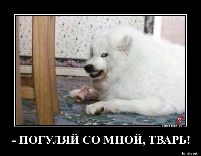 - ПОГУЛЯЙ СО МНОЙ, ТВАРЬ!