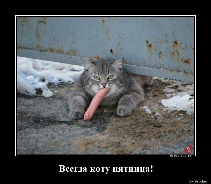 Всегда коту пятница!