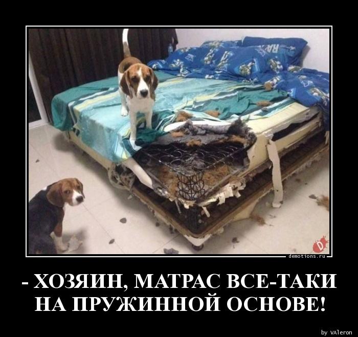 - ХОЗЯИН, МАТРАС ВСЕ-ТАКИ  НА ПРУЖИННОЙ ОСНОВЕ!