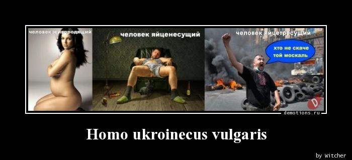 Homo ukroinecus vulgaris