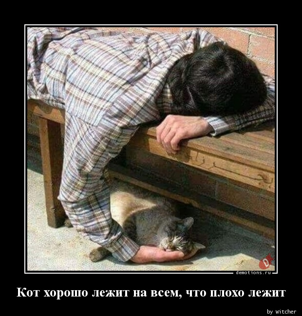 Кот хорошо лежит на всем, что плохо лежит