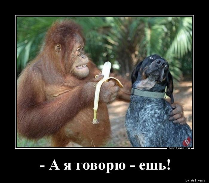 - А я говорю - ешь!