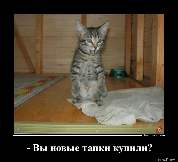 - Вы новые тапки купили?