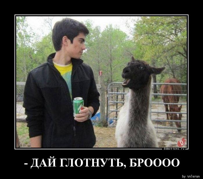 - ДАЙ ГЛОТНУТЬ, БРОООО