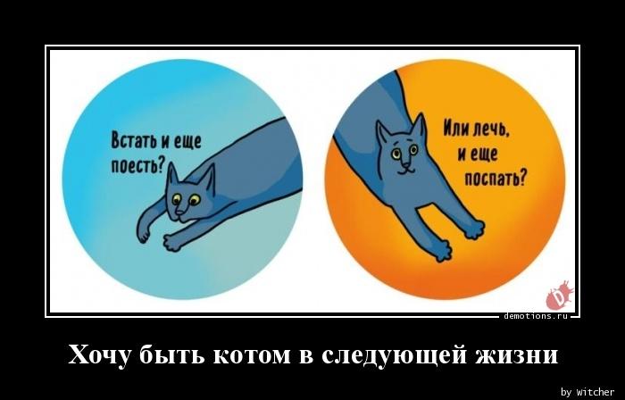 Хочу быть котом в следующей жизни