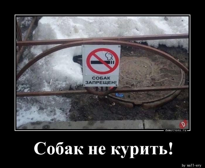 Собак не курить!