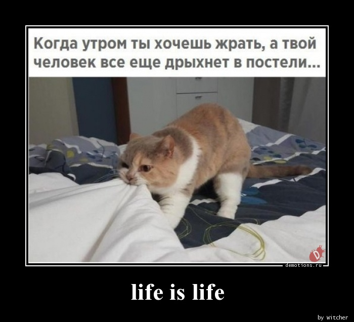 life is life