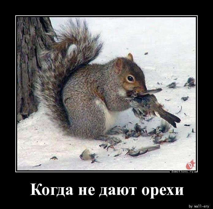 Когда не дают орехи