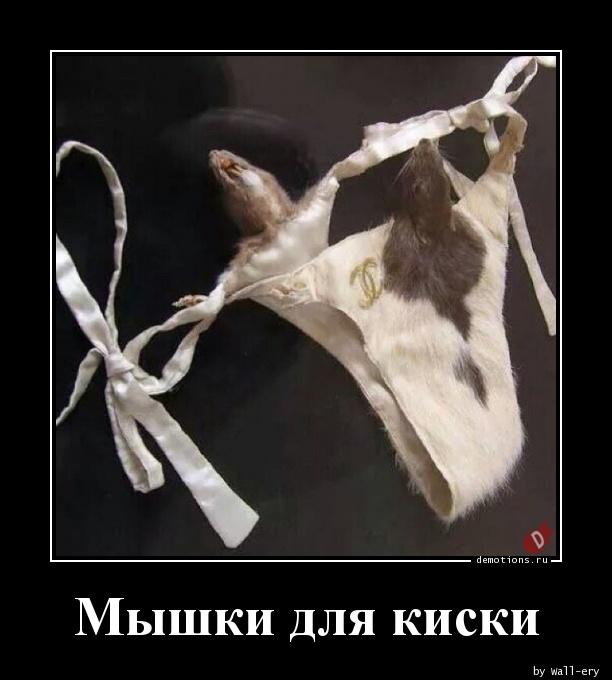 Мышки для киски