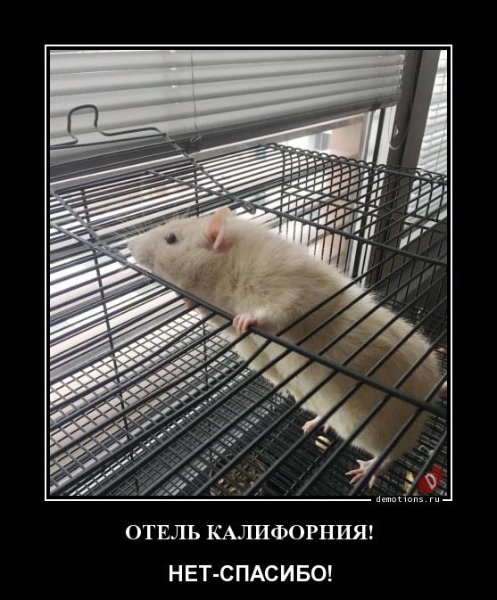 ОТЕЛЬ КАЛИФОРНИЯ!