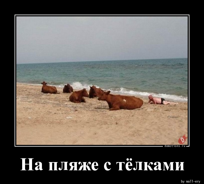 На пляже с тёлками