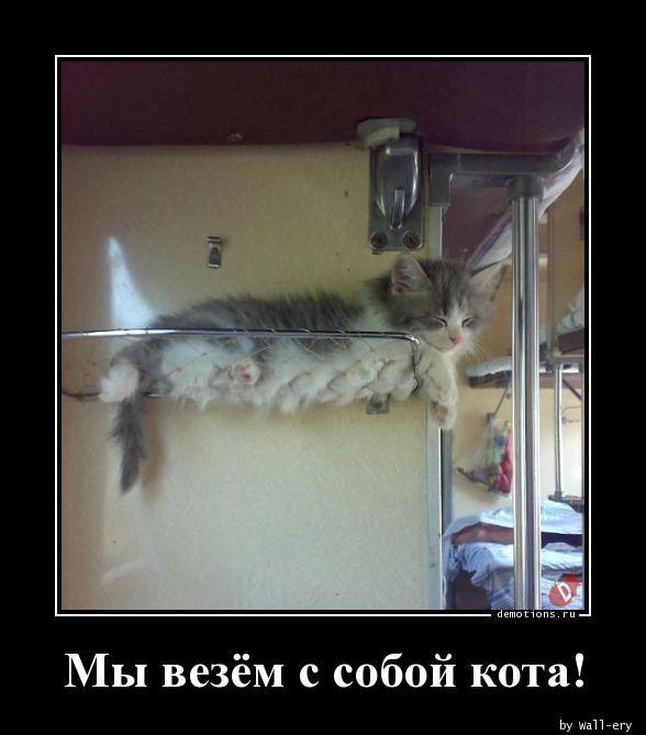 Мы везём с собой кота!