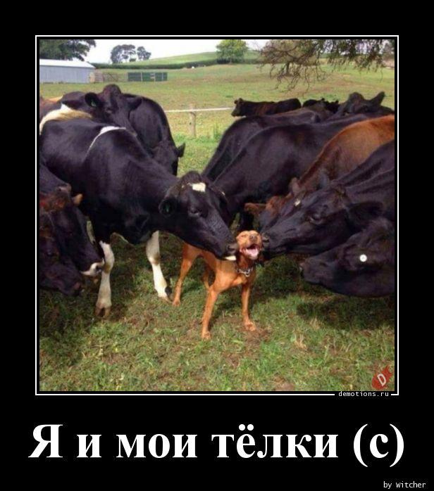 1523725247_Ya-i-moi-telki-s_demotions.ru