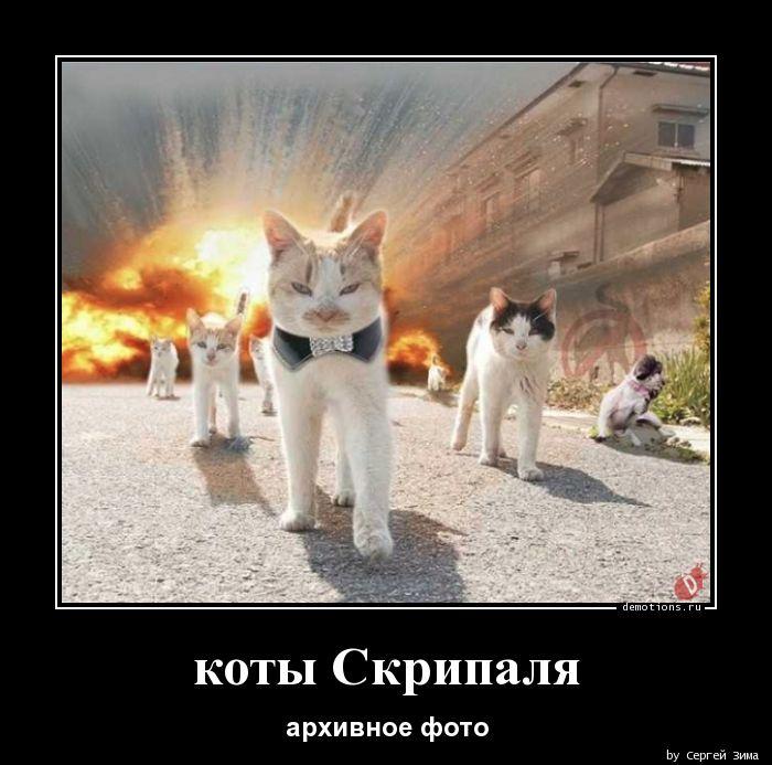 коты Скрипаля