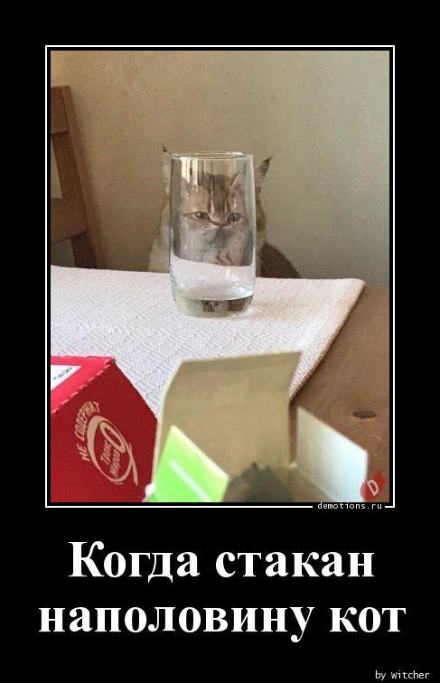 Когда стакан  наполовину кот