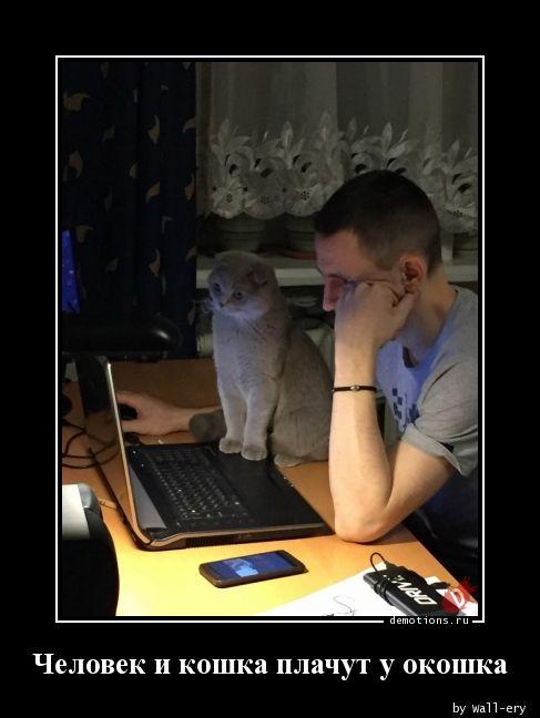 Человек и кошка плачут у окошка