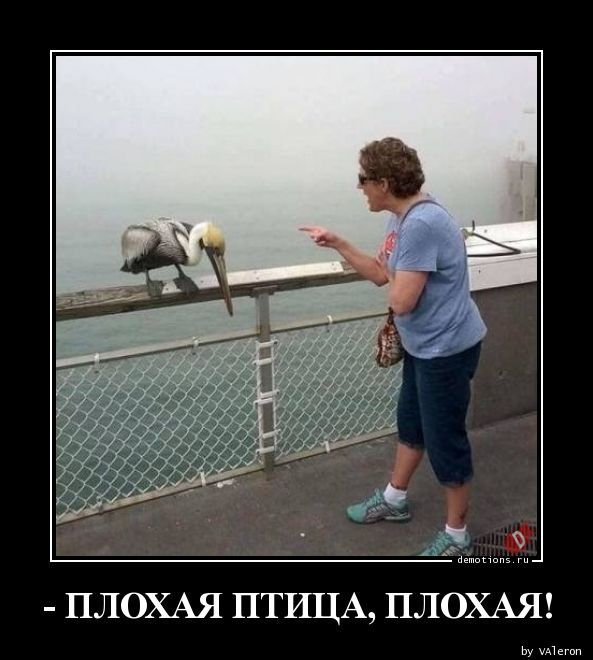 - ПЛОХАЯ ПТИЦА, ПЛОХАЯ!