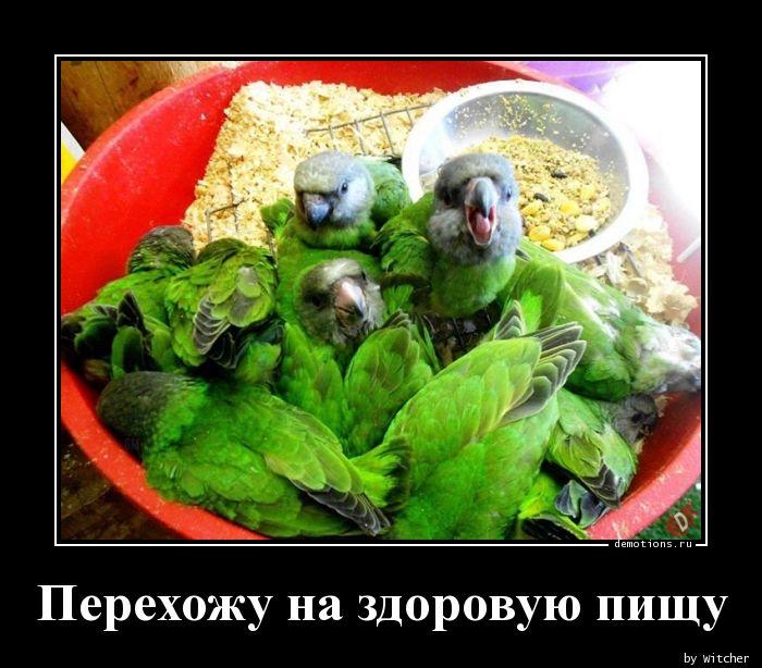 Перехожу на здоровую пищу