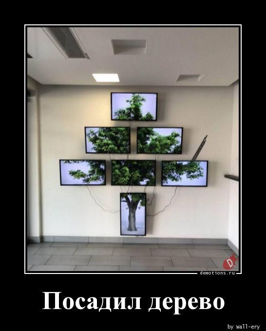 Посадил дерево
