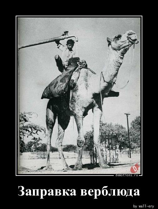 Заправка верблюда