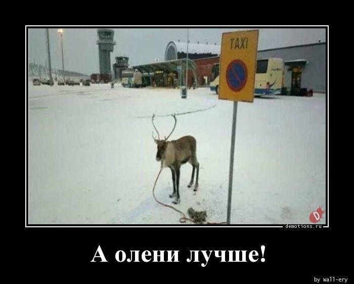 А олени лучше!