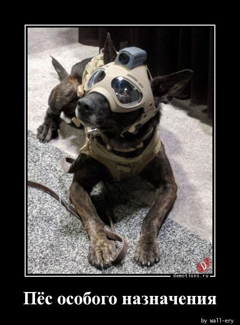 Пёс особого назначения