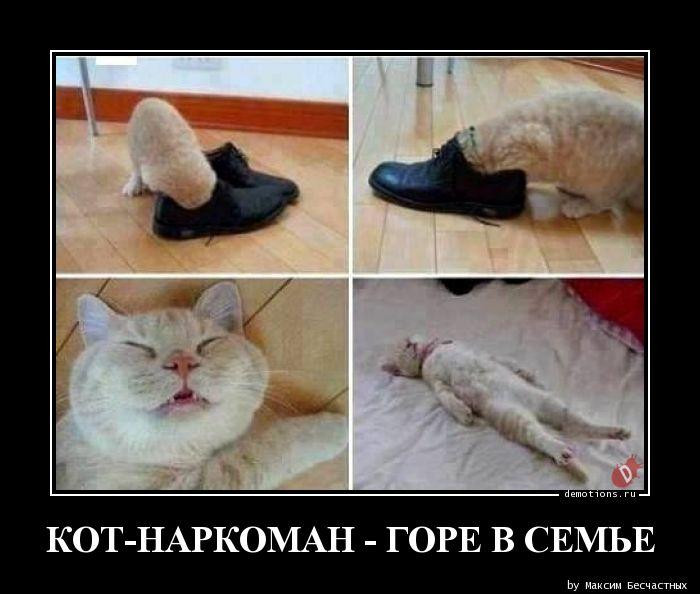 КОТ-НАРКОМАН - ГОРЕ В СЕМЬЕ