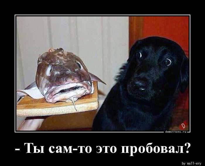 - Ты сам-то это пробовал?