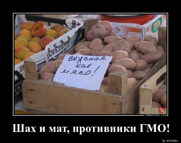 Шах и мат, противники ГМО!