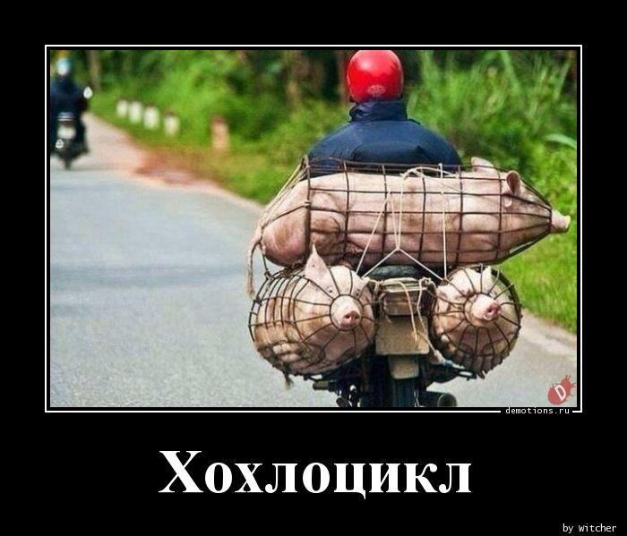 Хохлоцикл