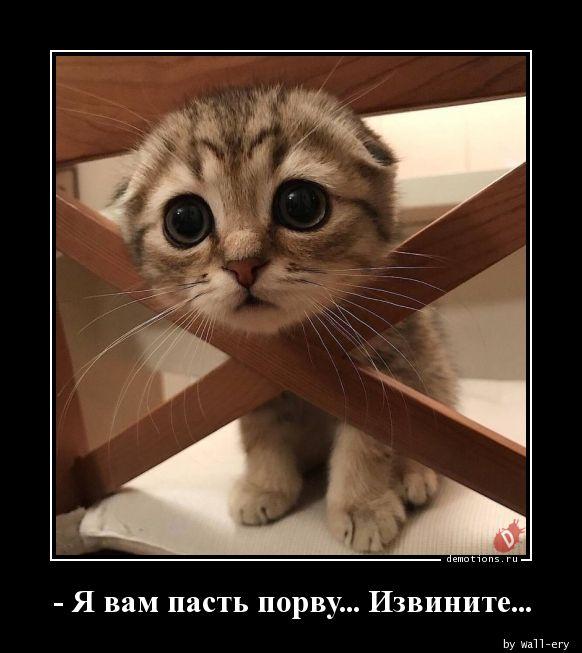 - Я вам пасть порву... Извините...