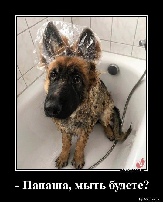 - Папаша, мыть будете?